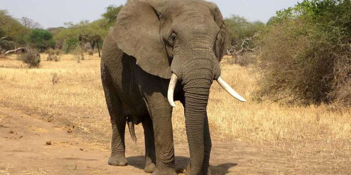Lessons Learned From The Elephants – Five Secrets To Self-Development From The Noble Giants