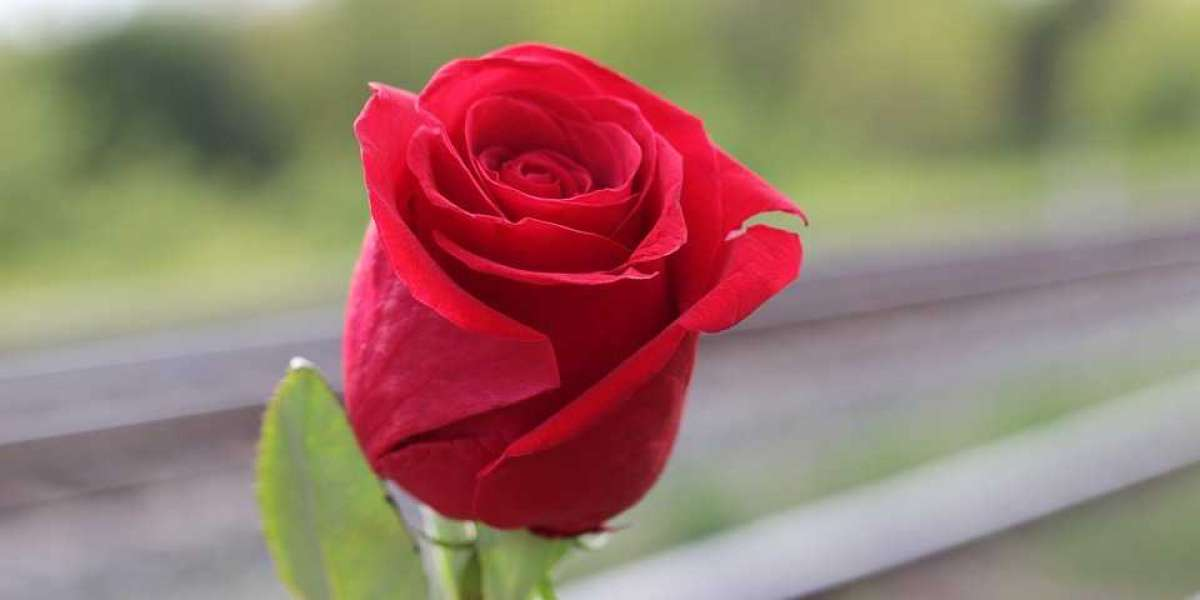 Roses From Heaven: The Power of Signs