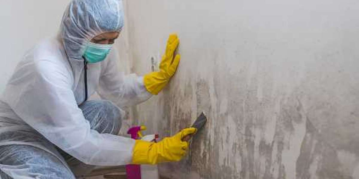 5 Reasons To Hire Professionals To Remove Mold In Your Home