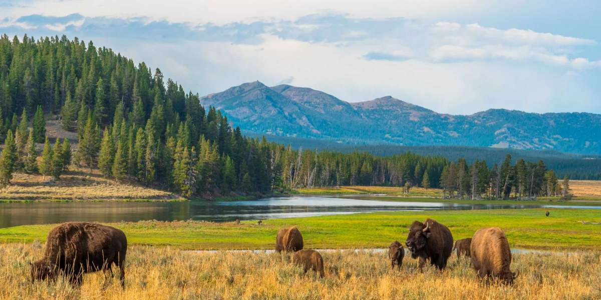 Trail Running in Yellowstone National Park